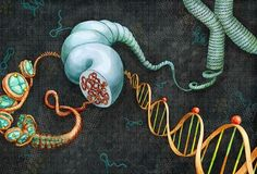 MicroRNA may suppress autism gene expression