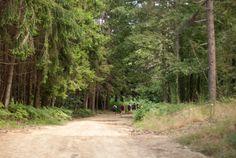 Walking in the forest... Camminando nel bosco.....