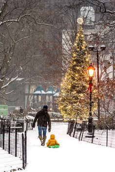 Snow sledding in Madison Square Park