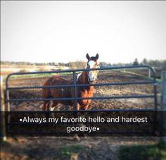 Cosas de caballos