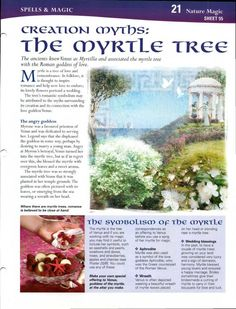 Mind, Body, Spirit Collection - Creation Myths The Myrtle Tree