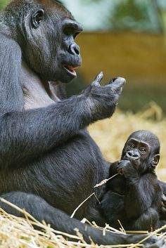 Mother gorilla with baby | Flickr - Photo Sharing!