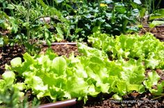 Best and easiest vegetables to grow in Oklahoma