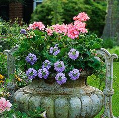 Landscape Projects Inc. Pink Geranium, Tall Plants, Pot Plants, Classic Garden, Purple Garden, Garden Planters, Garden Urns, Garden Inspiration, Garden Ideas