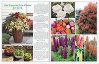 Growing Guide Hydrangea (Hydrangea)