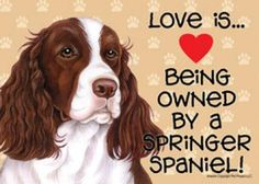 """Click visit site and Check out Best """"English Springer Spaniel"""" T-shirts. This website is excellent. Tip: You can search """"your name"""" or """"your favorite shirts"""" at search bar on the top."""