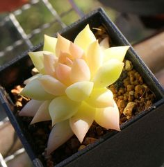 The Wiccan's Glossary succulents