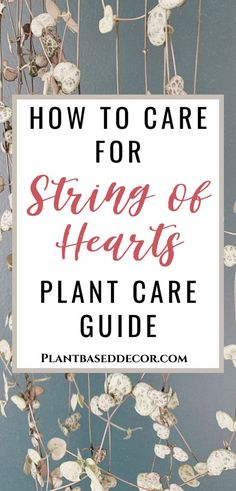 String of Hearts Plant Care#care #hearts #plant #string Easy House Plants, House Plants Decor, Plant Decor, Hanging Plants, Plants Indoor, Indoor Gardening, Planting Succulents, Planting Flowers, House Plant Care