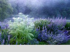 Narborough Hall Gardens The Blue Garden. A blue garden would be so lovely in the desert in the summer. Plant Design, Garden Design, Landscape Architecture, Landscape Design, Beautiful Gardens, Beautiful Flowers, Garden Cottage, Colorful Garden, Dream Garden