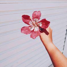 Instagram, Flowers, Peace