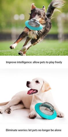 Benefits: Dog games for dog brain games. Interactive toys for dogs and puzzle for dogs. Dog chew toys. This toy has to dispense feeding pets when playing and it will keep on attracting pet's attention. 🐶 Toy Function: Easy and fun to play. Pets will get entertained for a very long time and your furniture will be thanking you. It controls the speed of your pet's eating habits avoiding indigestion. It has a leaking hole, allowing pets to eat while playing. Dog Treat Toys, Dog Chew Toys, Brain Games For Dogs, Dog Games, Dog Puzzles, Puzzle Toys, Dog Feeding Bowls, Dog Bowls, Dog Toys For Boredom