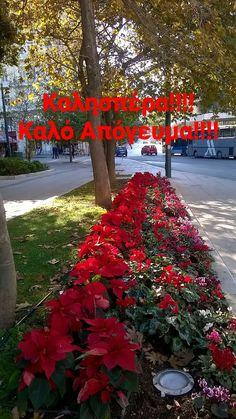 Good Morning, Sidewalk, Plants, Wallpapers, Buen Dia, Bonjour, Side Walkway, Walkway, Wallpaper