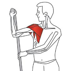 trigger point releases for shoulder using a tennis ball