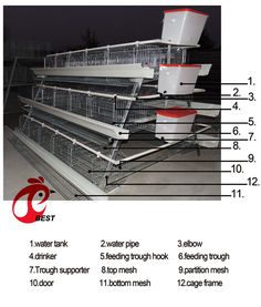 Egg production will increase to rearing in BEST layer cage.After the egg laying grow.