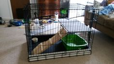 Dog crate rabbit cage