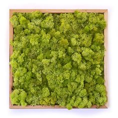 Monochromatic Moss Wall Art with light frame by WabiMoss on Etsy