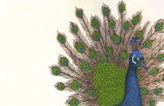 starting a peacock collection? // Grand Peacock Archival Print from Lisa Congdon Illustrations, Illustration Art, Peacock Art, Peacock Pics, Peacock Painting, Peacock Decor, Motif Art Deco, Pretty Pictures, Collage Art