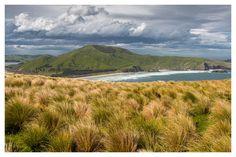 (English below)[Nouvelle-Zélande] Le Mont Charles, le point le plus haut (408 mètres) sur la péninsule d'Otago près de Dunedin - île du sud de la Nouvelle-Zélande. La marche jusqu'au sommet est raide mais recompensée par la vue imprenable sur la région ! . NOUVEAU : Vous souhaitez être informé par email de la réouverture des frontières de la Nouvelle-Zélande aux touristes étrangers ? Inscrivez-vous à notre alerte Antipodes Travel : le lien est dans notre bio. . //English [New Zealand]… Email, Point, English, Mountains, Nature, Travel, Instagram, New Zealand, Australia