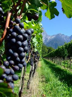 Beautiful perspective #wine #landscape