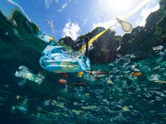 What Is Ocean Plastic? Everything you need to know about this major source of pollution. Ocean Pollution, Plastic Pollution, Environmental Pollution, Environmental Issues, Save Our Oceans, Oceans Of The World, Waste Art, Great Pacific Garbage Patch, Ocean Cleanup