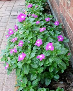 Lazy Gardening: Go with more of what grows best (Richard S. Buse photo).