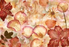 Brewster x - Dried Flowers - Unpasted Non-Woven Mural - 8 Panels Wall Coverings Wallpaper Murals Flower Collage, Flower Wall, Brewster Wallpaper, Photo Mural, Decoupage Art, Wallpaper Roll, Wallpaper Murals, Wallpaper Paste, Dried Flowers