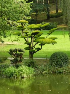 People are familiar with Japanese gardening, think that Chinese gardening would be similar his is untrue. While the Japanese garden is very ordered and serene. Topiary Garden, Bonsai Garden, Garden Trees, Trees To Plant, Garden Art, Beautiful Landscapes, Beautiful Gardens, Japanese Tree, Japan Garden
