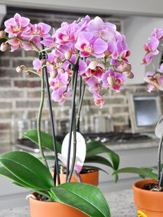I have recently found myself using orchids in my home more frequently. They are simple yet stunningly elegant and they tend to last longer than freshly cut flowers. So naturally, when I began to design my Easter table, orchids came to mind. While I wanted to do something different than last year (see my 2016 …