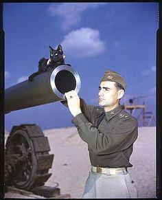 Tillie the artillery cat was the mascot of an Army Coast Artillery unit, 1941.