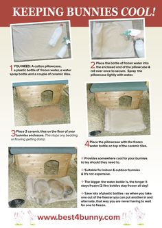 Very effective way to help keep your bunnies cool and it's cheap too!