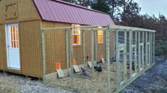 Have A Chicken Coop Up In 24 Hours Are you looking to build a chicken coop and would like to have one up no later than today? Whatever reason you'd like to build a chicken coop, either to raise food for you and your family or to cr