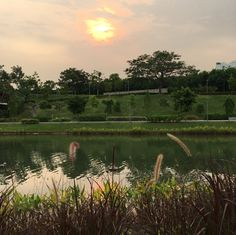 Singapore punggol waterway park #morningsun
