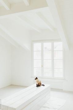 Like A Cat, Empty Room, Beams, Spare Room, Exposed Beams