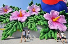 giant rose of sharon