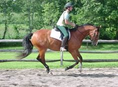I started making this list when I was thinking about things I have learned from riding clicker trained horses. After I wrote the list, I realized that many of the items are not specific to riding, ...