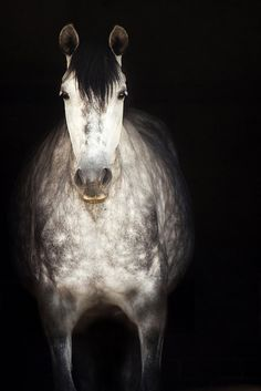 Horse in the dark by josefto, via Flickr