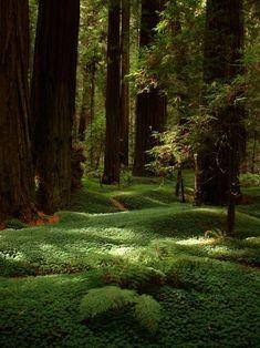 lieu de rêve: tapis de mousse et de fougère en forêt