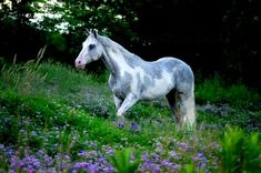 Grey and white pinto..wow!!°