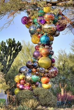 Another preview of the Chihuly exhibit opening this weekend at the Phoenix Desert Botanical Garden.
