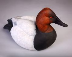 Canvasback Drake by Patrick Eubanks