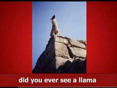 Here's a llama. There's a llama and another little llama. Llama Song (with official Llama Llama Duck, Funny Llama, Llama Alpaca, Nerd Love, My Love, New Funny Videos, Best Song Ever, Monty Python, Brain Breaks
