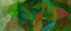 Visit the post for more. Goldfish, Watermelon, Common Carp