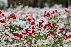 Первый снег в Москве может выпасть уже на следующей неделе - Городской круглосуточный информационный телеканал Москва 24