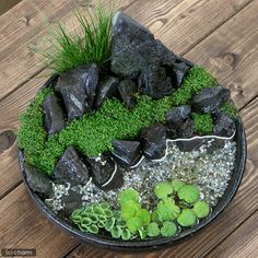 Need Japanese Garden Ideas? A lot of people have taken an interest in Japanese gardening, in recent times. Like any other pastime, gardening is a hobby that is enjoyed more when you have received the proper infor Bonsai Garden, Succulents Garden, Garden Plants, Mini Terrarium, Terrarium Plants, Water Terrarium, Indoor Water Garden, Indoor Plants, Pot Jardin