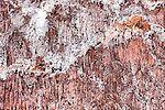 Salt on red rocks at the salt mine, Ounila Valley, Morocco. #moroccan #marocain #marocaine  #ounila_valley #maroc #morocco #marruecos #المغرب #مغرب #المغرب_الجميل