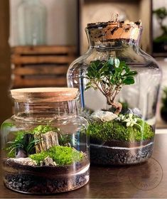 DIY Home Plant Terrariums Projects That Refresh Your Mind diy projects A terrarium is the perfect accent piece when you want to add a natural touch to your interior décor. Terrariums are small enough to sit on a desk or t. Terrarium Jar, Small Terrarium, Hanging Terrarium, Terrarium Plants, Bottle Garden, Glass Garden, Real Plants, Water Plants, Indoor Garden