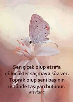 Sen çiçek olup etrafa gülücükler saçmaya söz ver. Toprak olup seni başının üstünde taşıyan bulunur... - Mevlana Good Happy Quotes, Good Life Quotes, Inspiring Quotes About Life, Quotes To Live By, Best Quotes, Inspirational Quotes, Urdu Quotes, Quotations, Rumi Poem