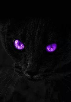 the purple! Purple Love, Purple Rain, Purple Stuff, All Things Purple, Shades Of Purple, Purple And Black, Pink Purple, Black White, Purple Wallpaper