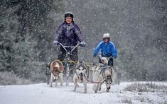 Sledders and their huskies practice on a forest course ahead of the Aviemore Sled Dog Rally in Feshiebridge, Scotland