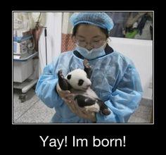 A Panda Is Born Meme | Slapcaption.com
